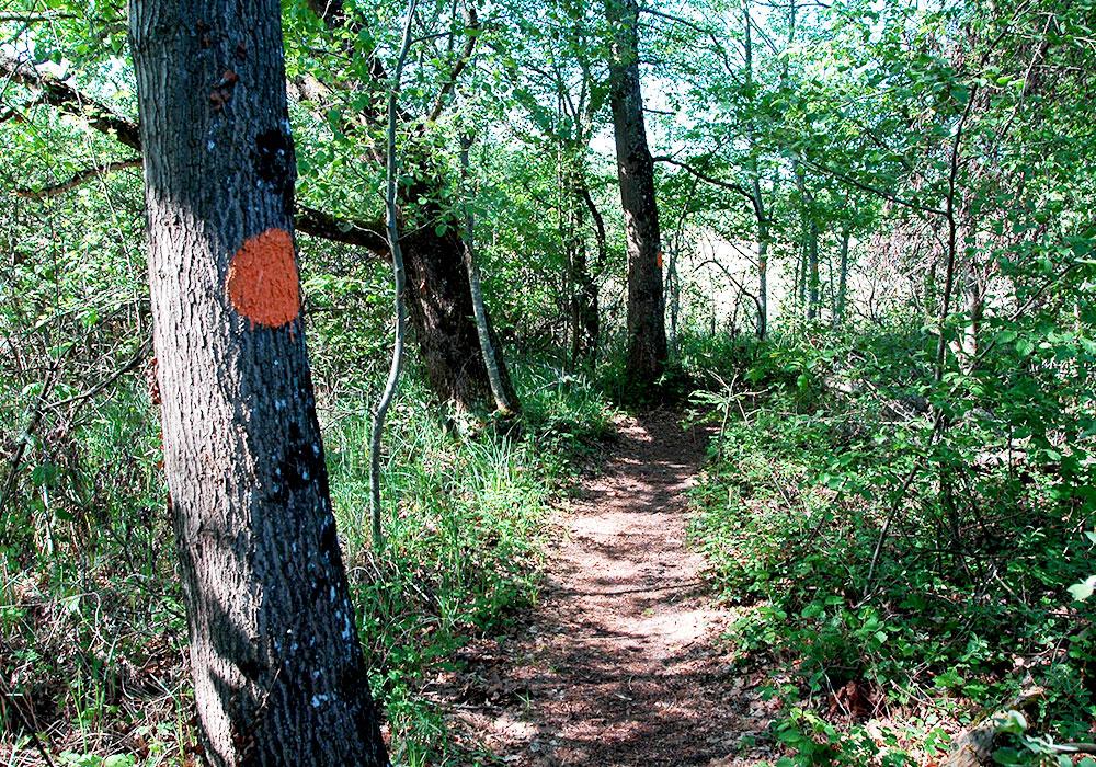 R glementation grande cari aie for Reglementation elagage des arbres